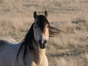 Free Range Horse
