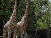 Giraffes@Shidoni