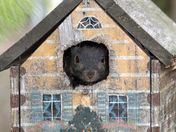 Squirrel in the bird house