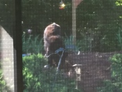 Bear at the bird feeder