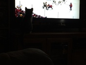 My little kitty watching the Penguins play in playoffs