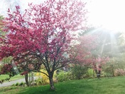Spring is in bloom!