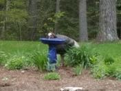 Thirsty gobbler