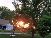 Sunset through the trees!
