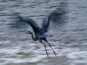 Blurred flight