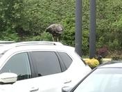 Olive Garden turkey