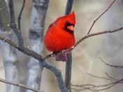 Birds -1