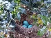 3 eggs!