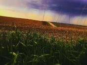 The good Nebraska wether