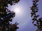 Sun Halo in South Portland