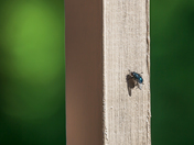 Bug hanging out by Sylvain Champagne