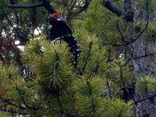 Spectacular Spruce