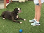 Allie: Friendly energetic, great on leash, knows commands,housetrained, healthy!