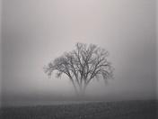 Sleepy Tree