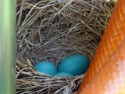 Robin's Nest, Rindge, NH