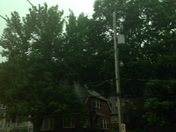 Wind blowing trees hard