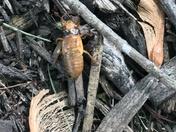Cicadas are HERE 😨