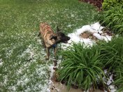 Titan enjoying the aftermath of the hailstorm