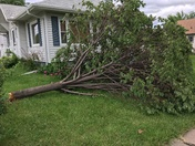 Tree Down 35th St. and 4th Ave, Council Bluffs