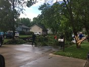 trees down Williams St