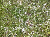 Williston hail