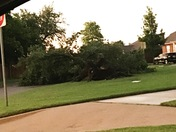 Tree down in Berkeley NW Norman