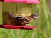 birds, 5-19-2017
