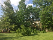 Storm damage today