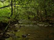 Chattahoochee-Oconee National Forest