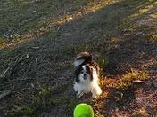 Dog play.