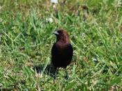 birds, 5-21-2017