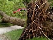 Thunderstorm wind damage