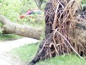 Straight line wind damage
