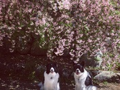 Spring flowers bring big smiles and happy dogs