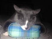 My cat havoc