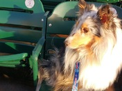 BELLA @ IOWA CUBS