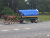 Horse-drawn wagon ambles up Route 25
