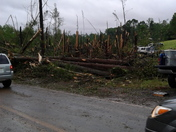 Trees snapped completely in half in Davie county