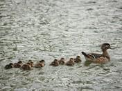 Mom lead the way