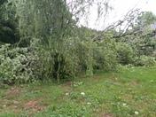 Trees down, tornado damage in Pinnacle