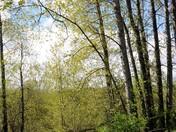 Rithet's Bog: Entry Path