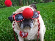 Puddin' the Pug supports Red Nose Day!