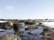 Arctic spring landscape