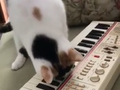 Kitty piano lessons