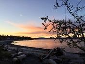 Beach Blossom Sunset