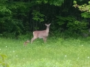 New baby fawn