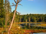 Scenery - Algonquin Provincial Park