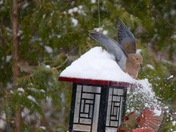 Winter fun at the feeder!