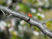 lady bug on the move
