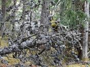 Dead Burnt Tree